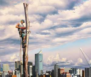 Last Tree Standing - PETER SMETS