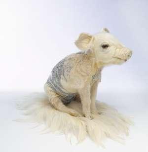 Piglet by JULIA deVILLE