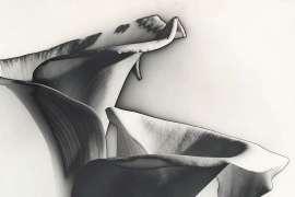 Arum Lilies by MAX DUPAIN