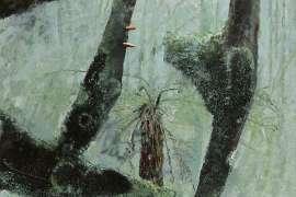 Tree Fern by CLIFTON PUGH