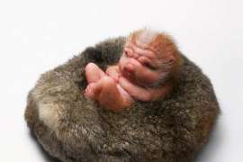 The Offering by PATRICIA PICCININI