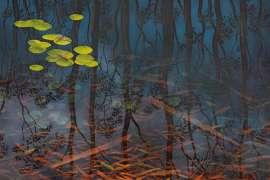 28. LIN ONUS Fish and Ripple - Dingo Springs I image