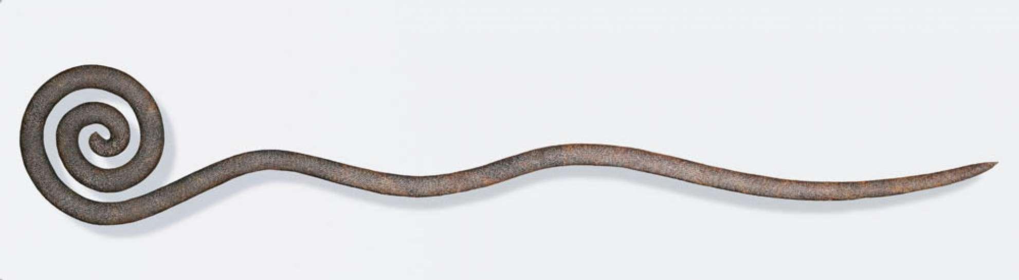 Snake by BRONWYN OLIVER