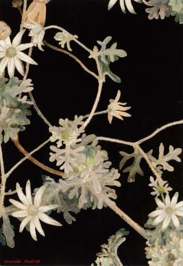 Entwined Flannel Flowers by CRESSIDA CAMPBELL
